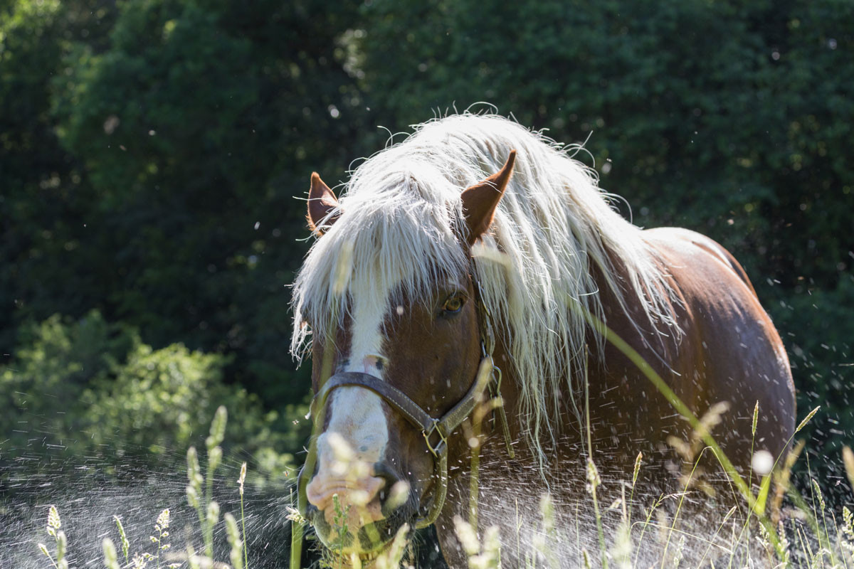 CBW-Atmung-Pferd-1200x800