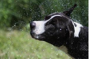 Hund Ohren